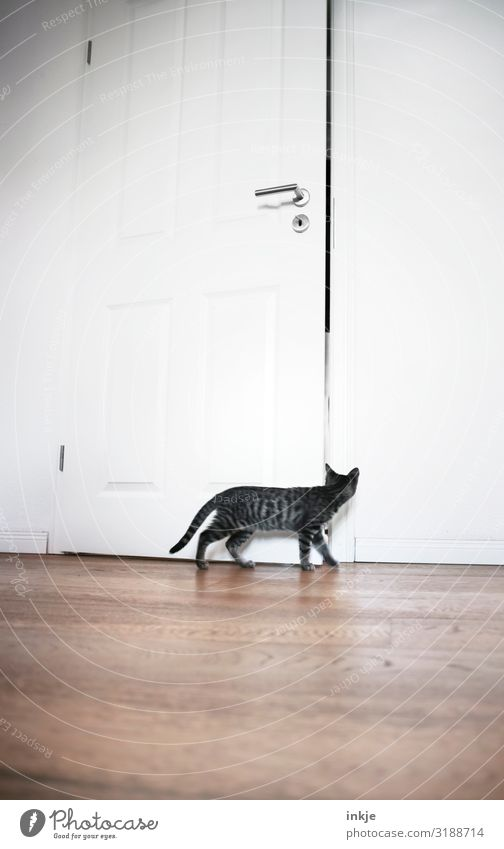 Cat Animal Baby animal Small Living or residing Flat (apartment) Room Door Cute Observe Curiosity Discover Pet Interest Wooden floor Period apartment