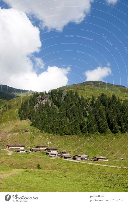 Central alp in the Alps Alpine pasture Mittelalm Coniferous forest mountains alpine meadow Clouds Blue sky Alpine huts Austria Mountain forest