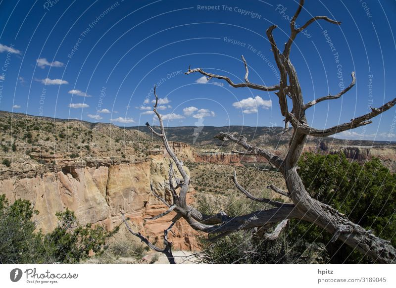 vast country Landscape Beautiful weather Tree Rock Canyon Esthetic Dry Warmth Wild Nature Far-off places Colour photo Exterior shot Deserted Day Contrast