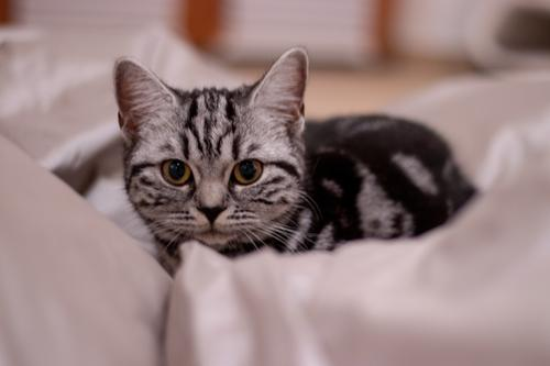 Cat White Animal Black Baby animal Small Gold Wait Cute Observe Curiosity Soft Pet Pelt Animal face Silver