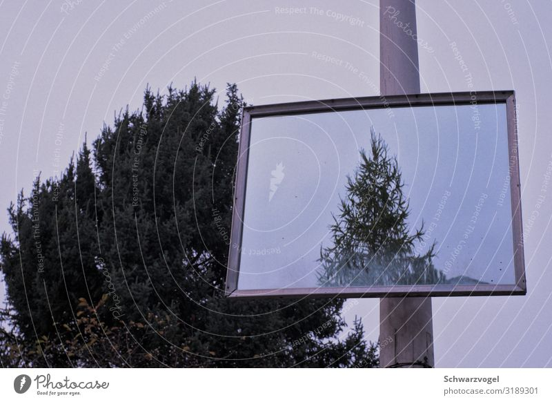 Plant Green Tree Calm Environment Small Together Gray Above Moody Growth Gloomy Perspective Large Mirror Relationship