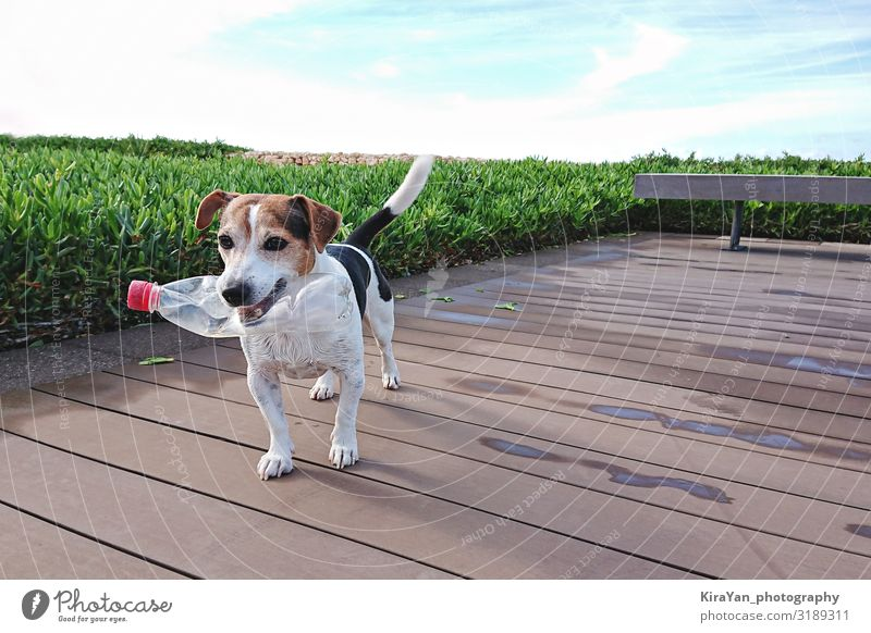 Cute dog holds plastic bottle in mouth outdoor Nature Dog Ocean Environment Small Friendship Authentic Walking Future Cleaning Plastic Pet Trash
