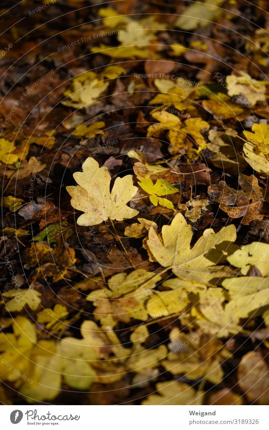 Hard gold Hiking Autumn Lie Yellow Gold Compassion Sadness Concern Grief Death Leaf Transience Colour photo Copy Space top Shallow depth of field