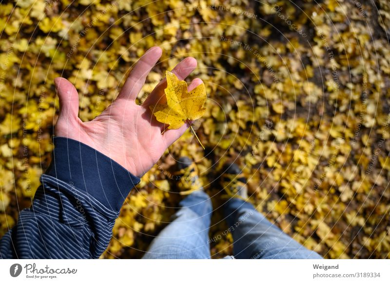 Leaf collector Harmonious Well-being Contentment Senses Relaxation Hand 1 Human being Elements Tree Observe Friendliness Happiness Yellow Gold Trust Curiosity