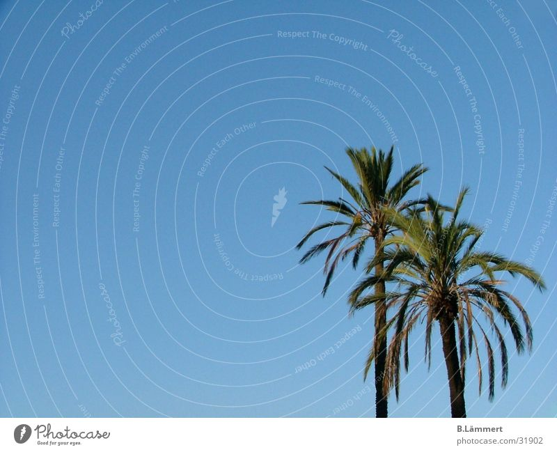 Palm trees in the sky Dream Rome Beach Beautiful Summer Europe Sky Paradise Freedom Blue
