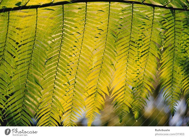 Nature Green Plant Leaf Pteridopsida