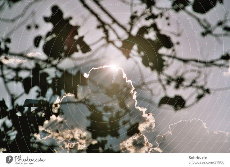 Tree Sun Clouds Raincloud
