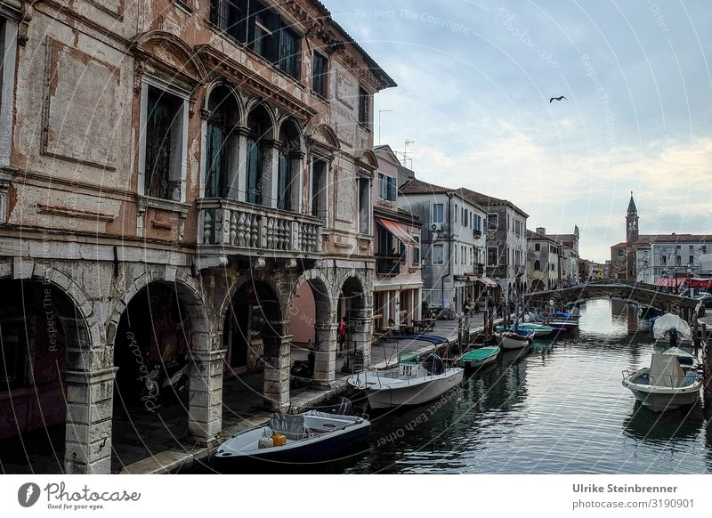 Marode Splendour Tourism Sightseeing City trip Autumn chioggia Italy Europe Village Fishing village Small Town Port City Downtown Old town