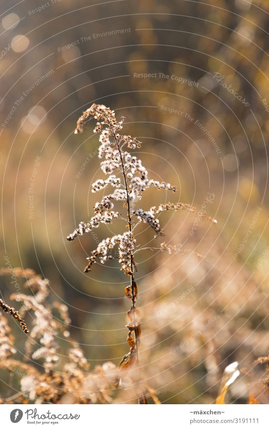 In backlight Nature Landscape Plant Grass Bushes Meadow Brown Gold White Still Life Autumn Blur Shallow depth of field Isolated Image Shriveled Colour photo