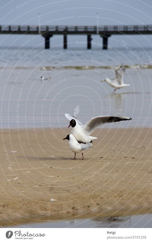 Nature Blue Water White Landscape Animal Beach Black Environment Spring Natural Movement Exceptional Bird Brown Sand