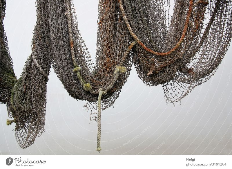 old fishing net with ropes hanging on a white wall Wall (barrier) Wall (building) Decoration Fishing net Net To hold on Hang Old Exceptional Historic Uniqueness