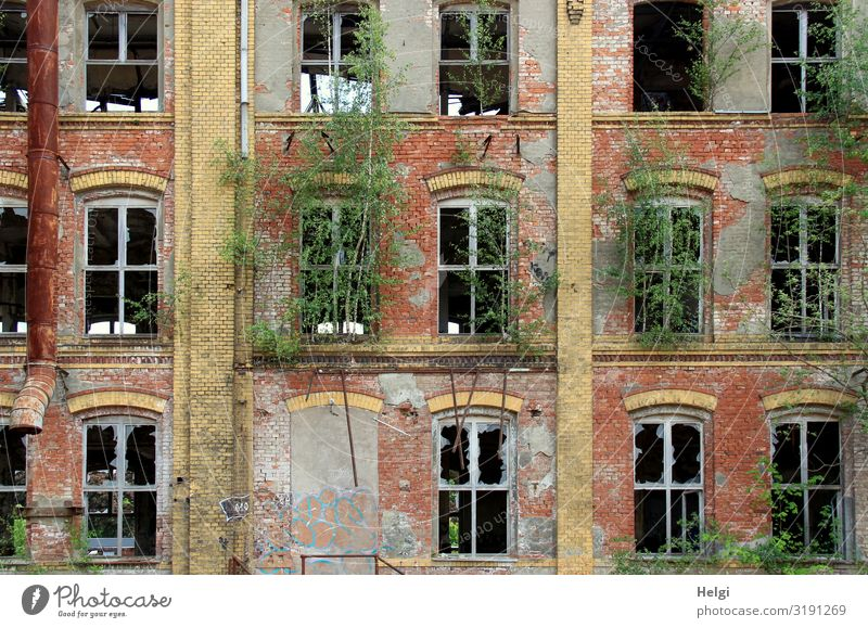 Facade of an old historic brick building with destroyed windows and green vegetation Environment Plant Tree Chemnitz Building Wall (barrier) Wall (building)
