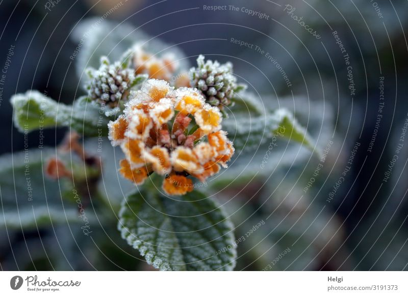 Nature Plant Green White Flower Leaf Autumn Yellow Environment Blossom Cold Natural Exceptional Gray Park Ice