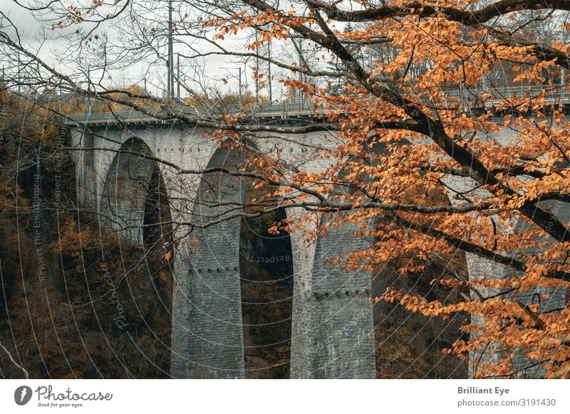 Arch bridge in autumn colours Vacation & Travel Nature Landscape Autumn Tree Deserted Bridge Landmark Round Yellow Gray Esthetic Relationship Europe Switzerland