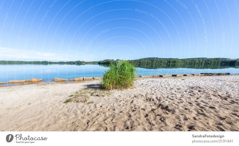 Environment around Lake Murner, Wackersdorf Bavaria Relaxation Vacation & Travel Camping Cycling tour Summer Hiking Nature Water Swimming & Bathing