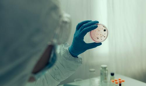 Scientist examining virus in petri dish in a laboratory Illness Laboratory Human being Woman Adults Hand Suit Gloves Safety Protection Petri dish Virus isolate