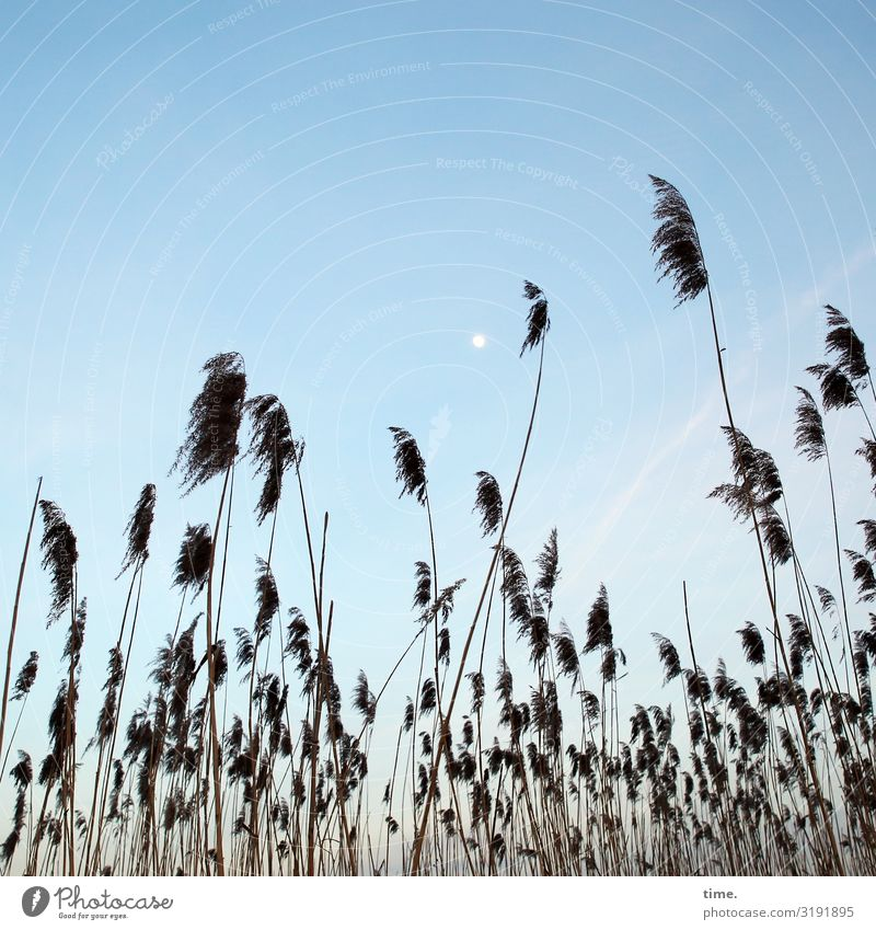 Moon phase Sky Grass grasses vacation discovery Perspective Clouds Marsh at the same time in common fellowship Stand wax Nature Landscape Beautiful weather rest