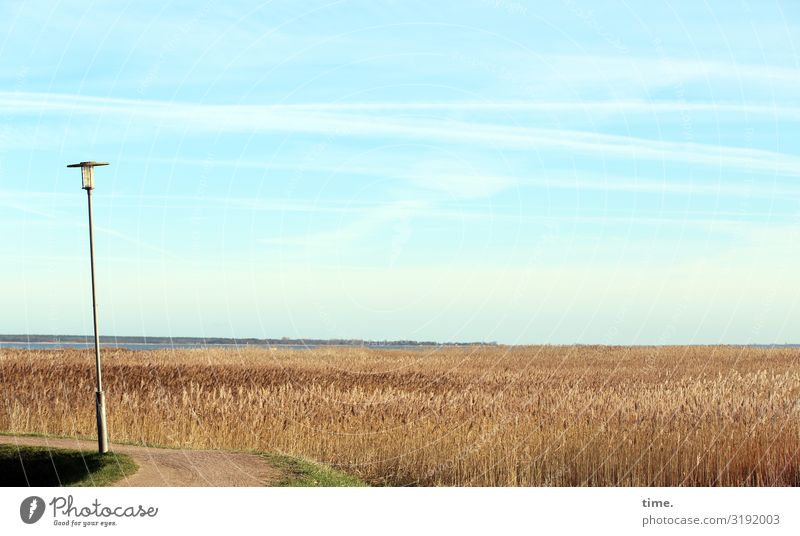 Sky Vacation & Travel Nature Plant Landscape Loneliness Calm Far-off places Food Life Environment Lanes & trails Time Moody Horizon Field