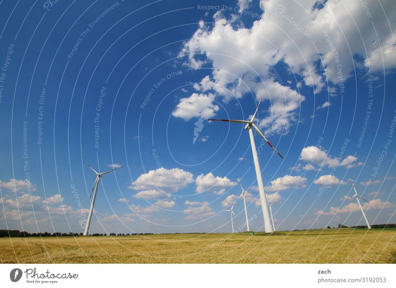 Sky Plant Blue White Clouds Environment Meadow Grass Field Energy industry Beautiful weather Climate Agriculture Wind energy plant Environmental protection