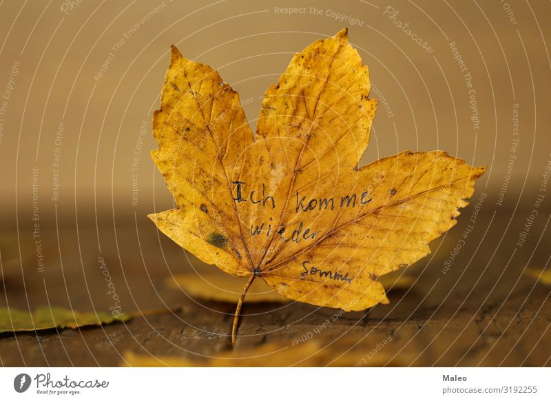 I'll be back. Summer. Background picture Wood Maple tree Autumn Yellow Nature Concepts &  Topics Design Beautiful Abstract Leaf Wooden board Natural Tree