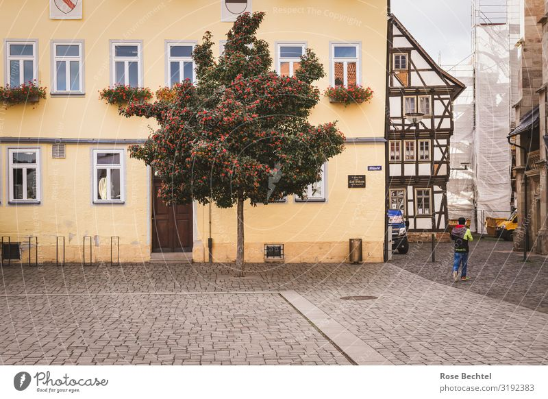 Schmalkalden Altmarkt Environment Autumn Tree Germany Thuringia university town Half-timbered facade Europe Town Old town Brown Yellow Green Construction site