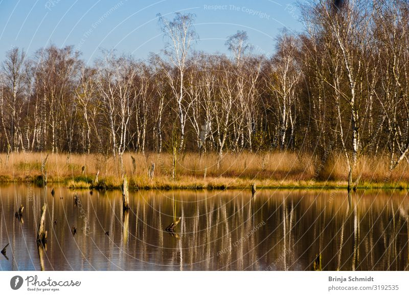 Autumn walk in the moor Nature Landscape Plant Water Sky Climate change Beautiful weather Tree Wild plant Bog Marsh Pond Old Observe Going Hiking Simple Wet Dry
