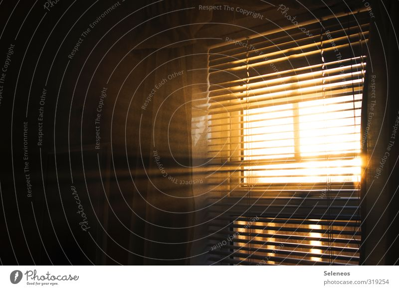 Let the sun in Living or residing Flat (apartment) Interior design Room Sun Beautiful weather Window Line Calm Curtain Roller blind Damp Haze Fog Colour photo