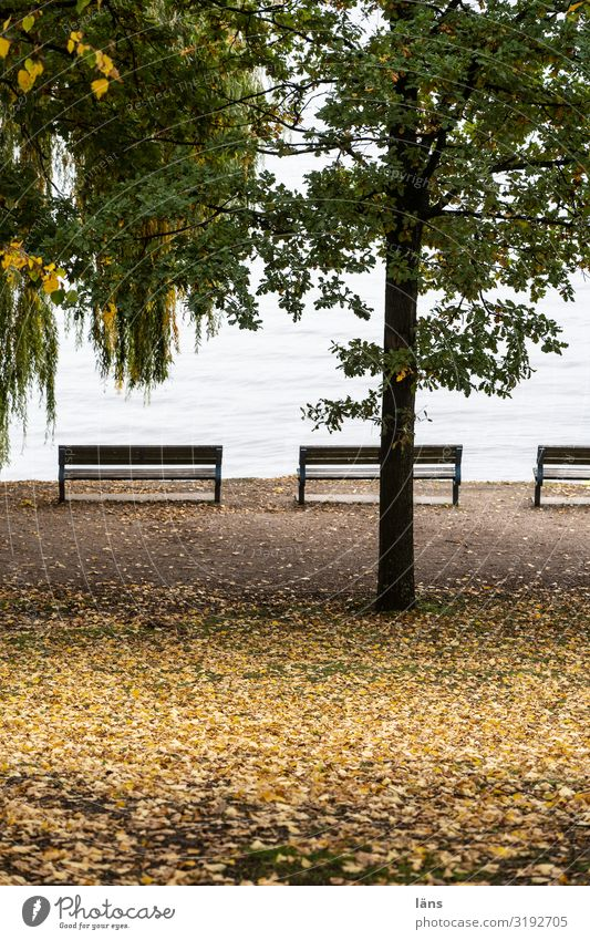 at the Alster Hamburg Tree Bench Park Deserted