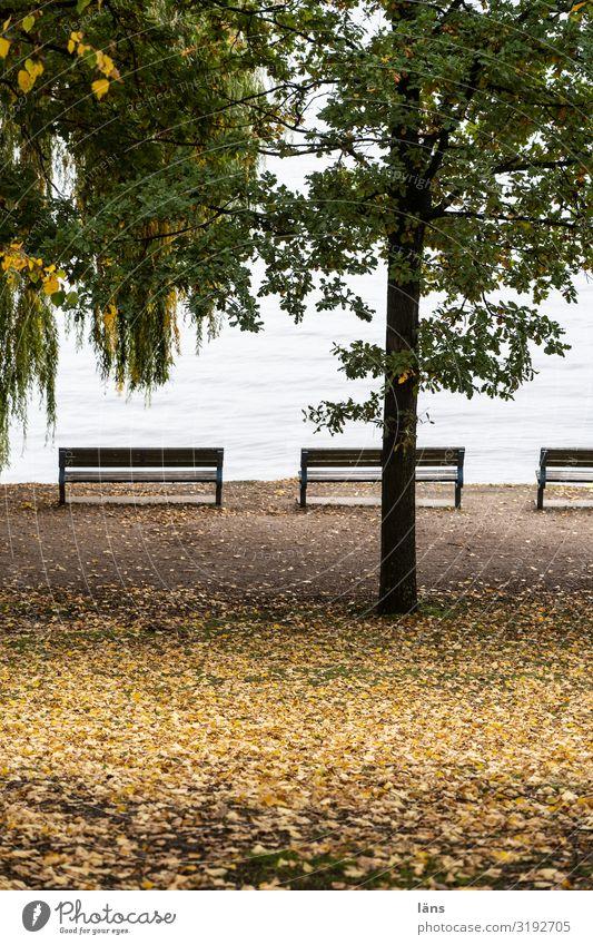 Tree Park Hamburg Bench Alster