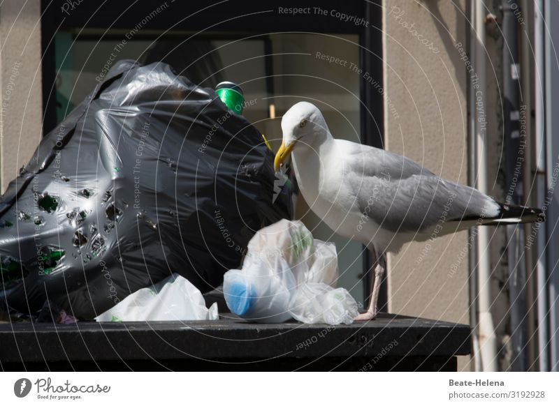 Garbage in plastic bags Environment Beautiful weather Town Downtown Street Roadside Bird Seagull Plastic packaging Plastic bag Threat Dirty Disgust Creepy
