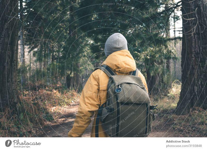 Unrecognizable traveler in conifer forest Lanes & trails Forest Conifer Tree Man Backpack Sunbeam Day Stand Nature Landscape Trip Tourism Adventure Hiking