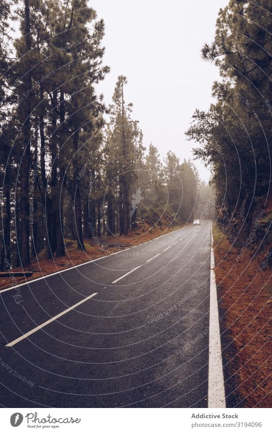 Car on road in overcast day Street Fog Cloud cover Day Empty Wet surrounded Spain Tenerife Remote Tree Clouds Drive Vacation & Travel tranquil Mysterious Trip