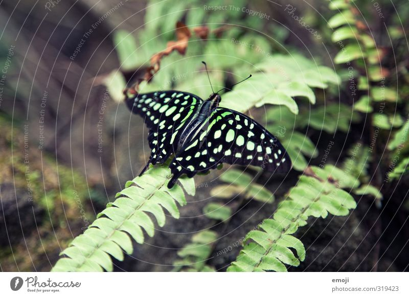 Nature Green Plant Animal Environment Natural Wild animal Wing Butterfly Zoo Exotic