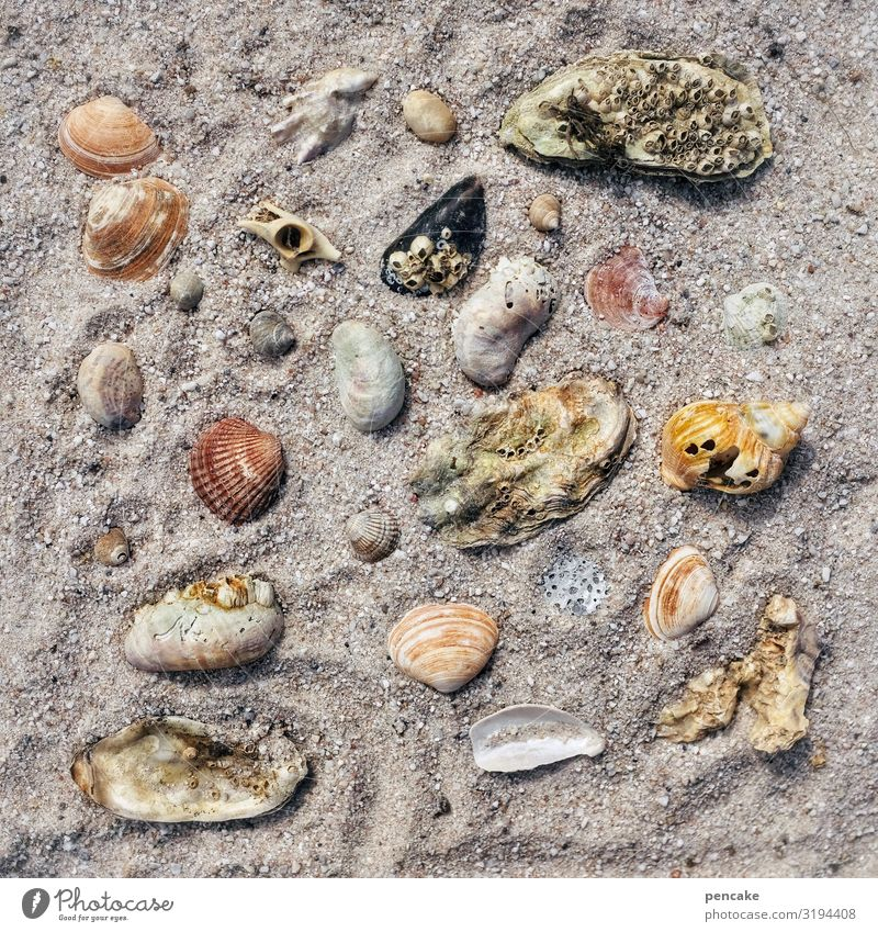 assortment Snail Mussel Esthetic Contentment Relationship Relaxation Leisure and hobbies Uniqueness Nature Senses Joy Planning Tourism Vacation & Travel