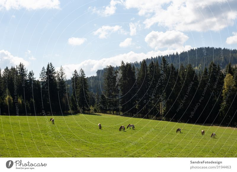 Landscape picture from the national park in Bavaria Vacation & Travel Summer Nature Plant Meadow Animal Group of animals To enjoy Walking Hiking Romance