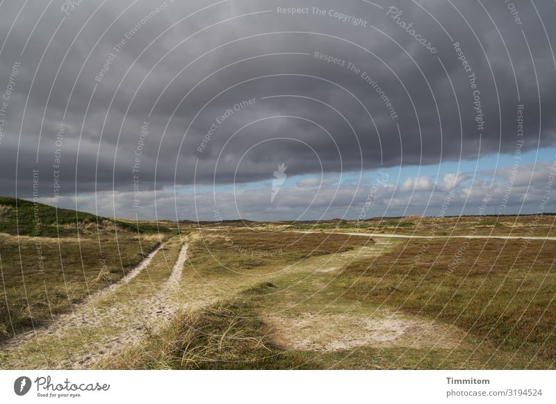 Way with choice Vacation & Travel Environment Nature Landscape Plant Sky Storm clouds Weather Grass Dune Denmark Lanes & trails Threat Dark Natural Blue Brown