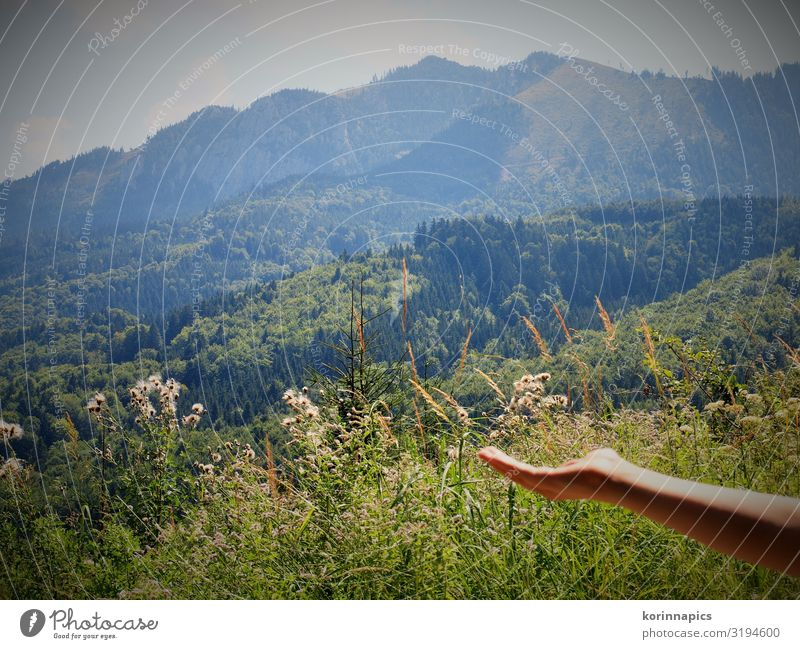 The happiness of the mountains Happy Vacation & Travel Trip Mountain Hiking Arm Hand Landscape Plant Sun Field Forest Alps Power Trust Beginning Uniqueness