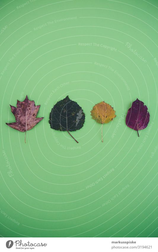 Plant Green Tree Animal Leaf Background picture Lifestyle Yellow Dye Garden Brown Leisure and hobbies Violet Autumnal Play of colours Minimalistic