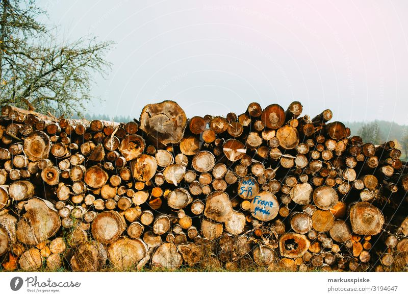 Firewood Forestry Leisure and hobbies Garden Nature Landscape Autumn Plant Tree Agricultural crop Wood Forstwald Raw materials and fuels Harvest Colour photo