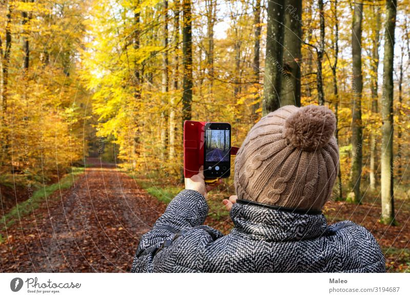 A woman photographs a beautiful autumnal forest camera Photography Beautiful Young woman Autumn Woman Nature Human being Technology Telephone Happy Cellphone