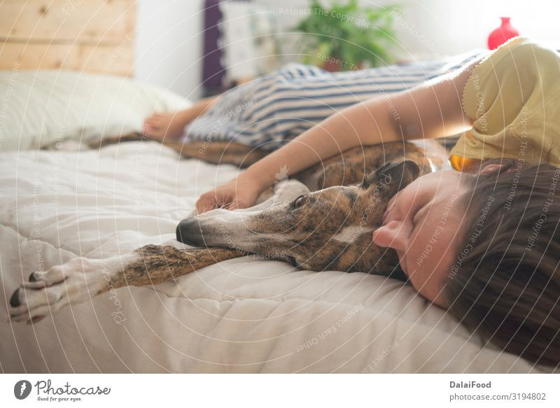 Dog in the bedroom relaxing Colour White House (Residential Structure) Animal Winter Autumn Warmth Funny Family & Relations Happy Style Gray Friendship Modern