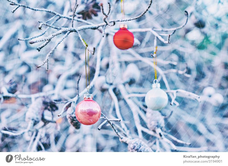 Christmas red glass balls on branches of tree Lifestyle Elegant Winter Snow Decoration Wallpaper Feasts & Celebrations Christmas & Advent New Year's Eve Tree
