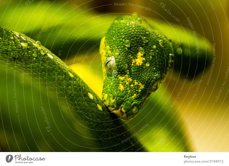 Snake after the sport Nature Animal Wild animal Animal face Zoo 1 Green Colour photo Close-up Central perspective Animal portrait