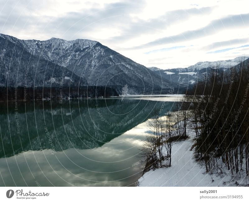 Winter at the lake... Nature Landscape Clouds Tree Alps Mountain Snowcapped peak Lake Sylvenstein memory Cold Green Calm Stagnating Frost Bavaria Relaxation