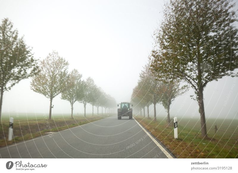 Country road in the fog Haze Direct Right ahead Autumn Autumnal colours Landscape Deserted Morning Fog Perspective Far-off places Sun Street Copy Space Tractor