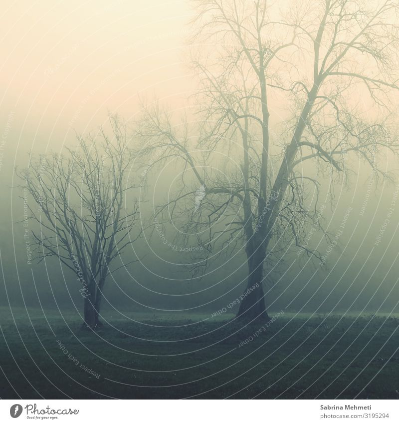 Landscape Tree Dark Autumn Fog