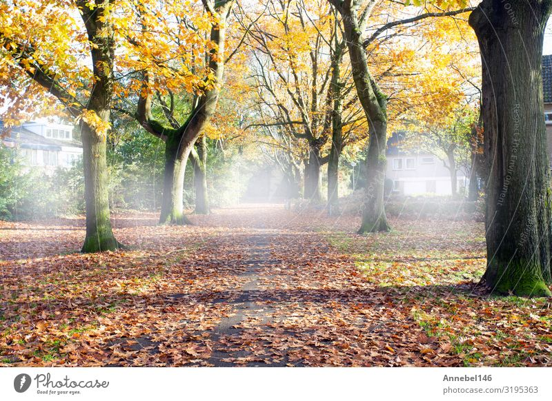 Road through the autumn forest with high trees, Beautiful Vacation & Travel Environment Nature Landscape Plant Autumn Fog Tree Grass Leaf Park Forest Street