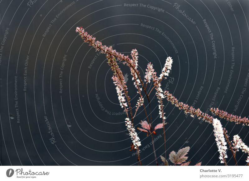 Nature Plant Beautiful Flower Animal Calm Black Environment Blossom Style Stone Pink Line Illuminate Growth Elegant