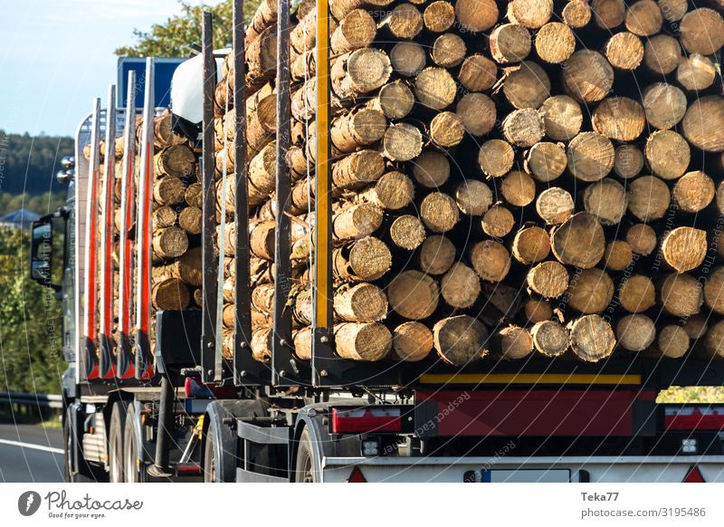 Nature Plant Landscape Tree Wood Environment Esthetic Beverage Logistics Tree trunk Highway Logging trucks