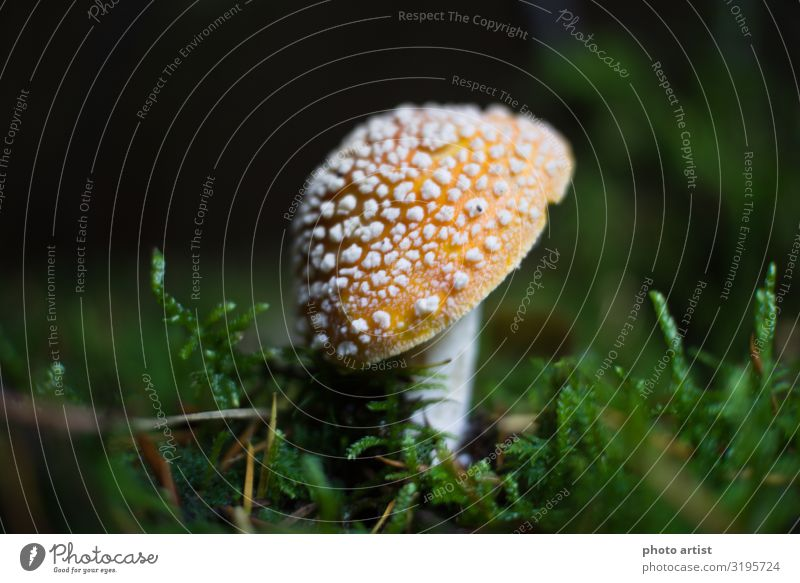 Fly agaric Amanita Muscaria Environment Nature Plant Earth Sun Sunlight Autumn Beautiful weather Moss Wild plant Exotic Park Meadow Forest Upper Danube valley
